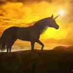 How To Build Unicorns: Actually Solve Your Own Problem