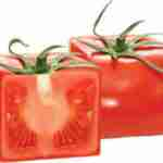 are you growing square tomatoes?